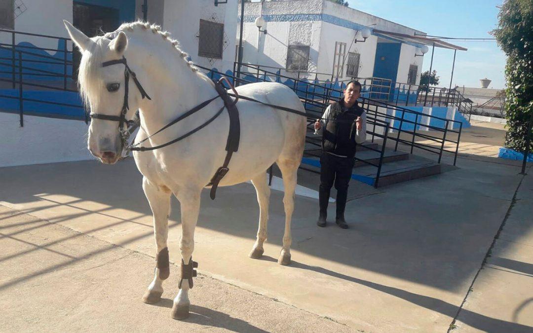 La técnica del enganche, nuevo recurso equino a disposición de los residentes de Betsaida
