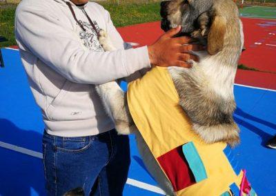 fotos perros de terapia (1)