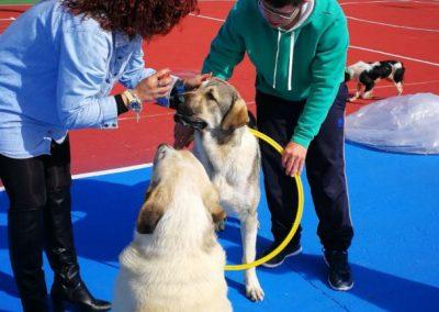 fotos perros de terapia (3)