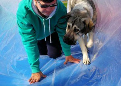 fotos perros de terapia (5)