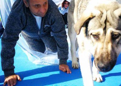 fotos perros de terapia (6)