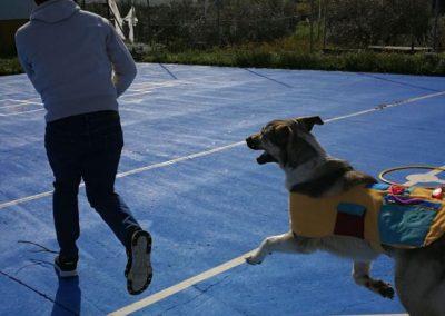 fotos perros de terapia (7)